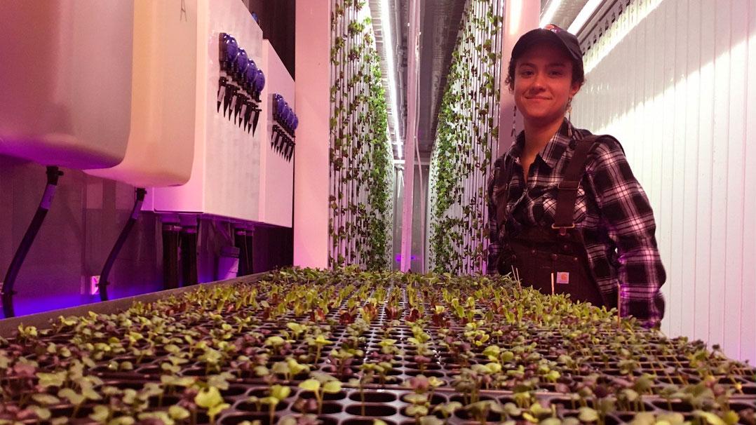 O projeto Square Roots está cultivando verduras em containers