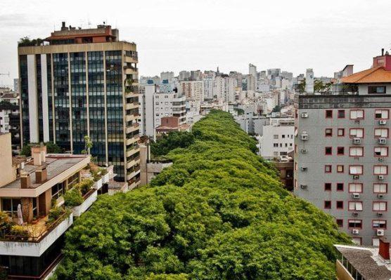 arvores-ruas-cidades-inova-social-03