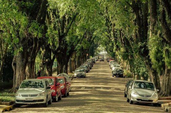arvores-ruas-cidades-inova-social-04