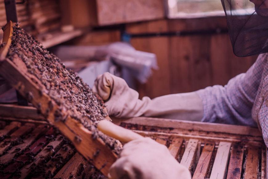 A apicultura de mangue: O empoderamento social com abelhas, Ford Fund e Enactus