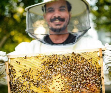 townbee-abelhas-enactus-ford-inovasocial