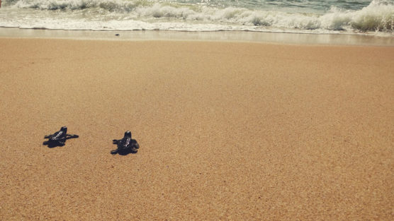 projeto-tamar-praia-do-forte-bahia-filantropia-inovasocial-02