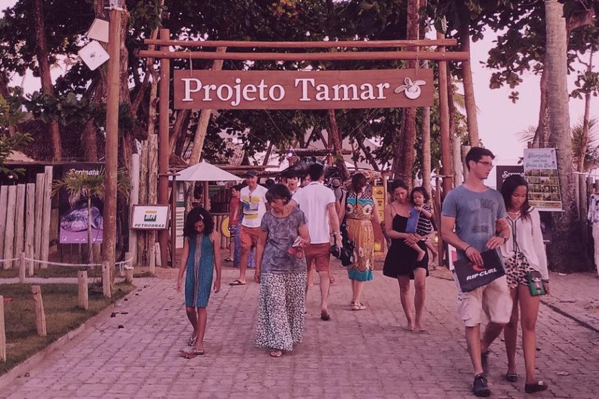 projeto-tamar-praia-do-forte-bahia-filantropia-inovasocial-destaque