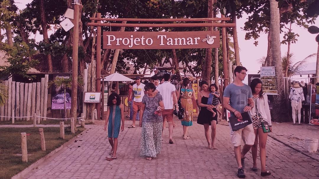 Que tal conhecer um Centro de Visitantes do Projeto TAMAR?
