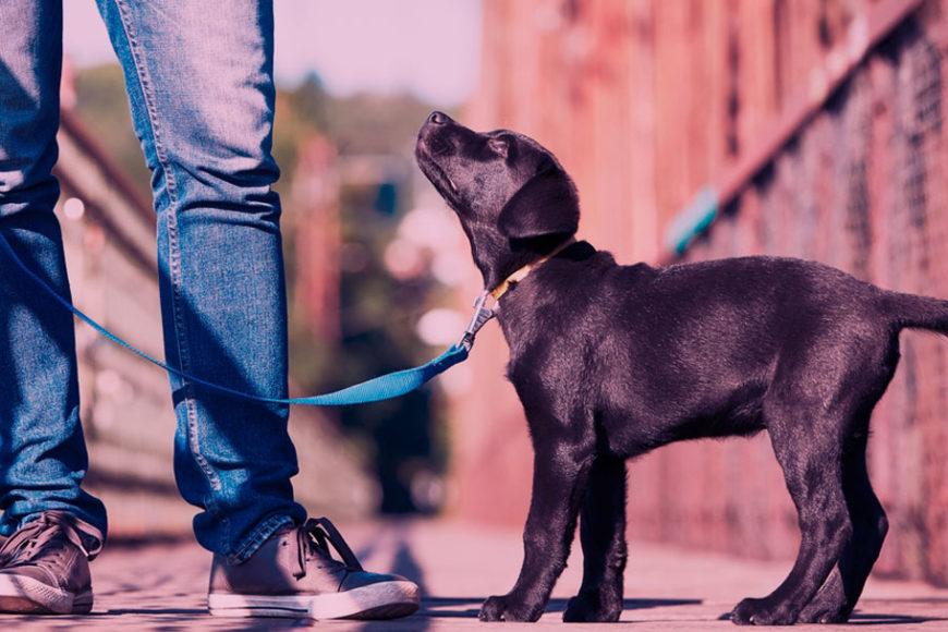 puppyfi-inovasocial