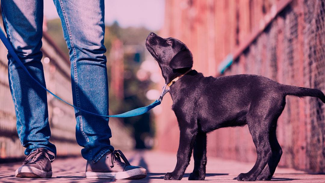 Puppyfi: Rede social de ajuda para pets é lançado no Brasil