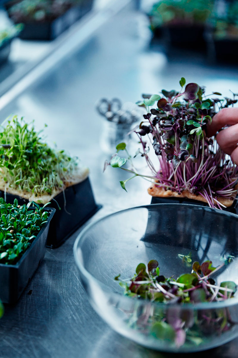 comida-futuro-ikea-space10-inovasocial-07