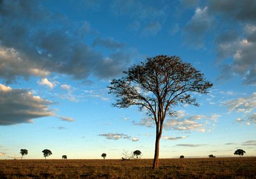 mudancas-climaticas-biodiversidade-brasileira-wwf-brasil-01