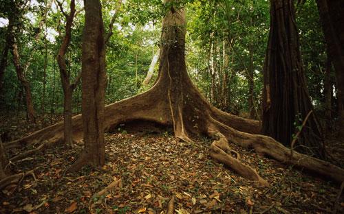 mudancas-climaticas-biodiversidade-brasileira-wwf-brasil-03