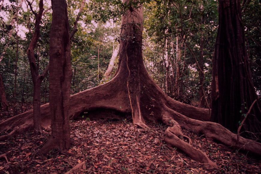mudancas-climaticas-biodiversidade-brasileira-wwf-brasil