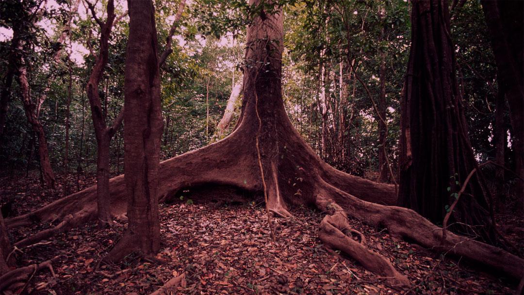 O que sabemos sobre a biodiversidade e as mudanças climáticas no Brasil?