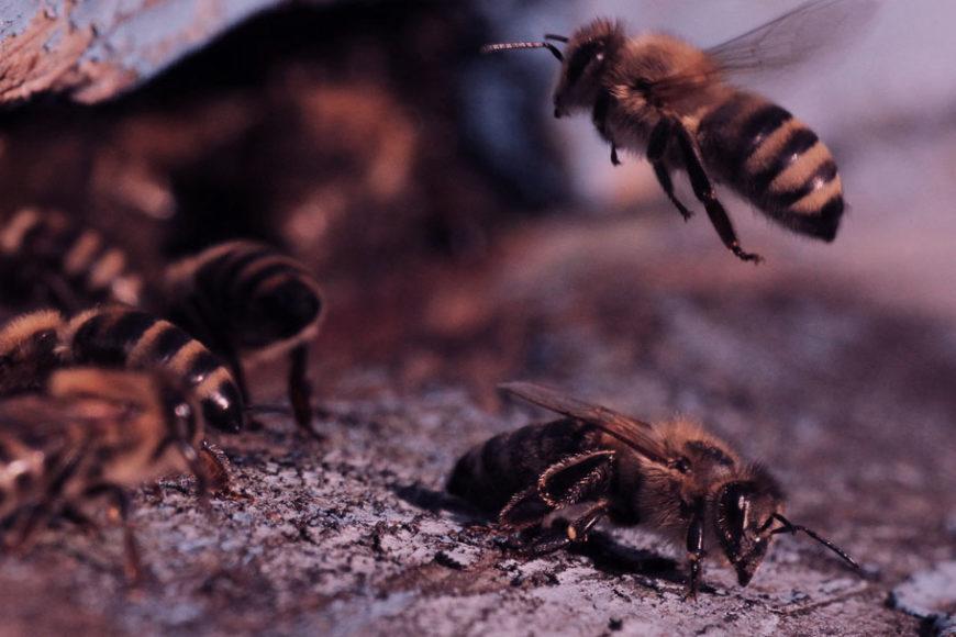 ODS nº13: As mudanças climáticas e o impacto na vida das abelhas