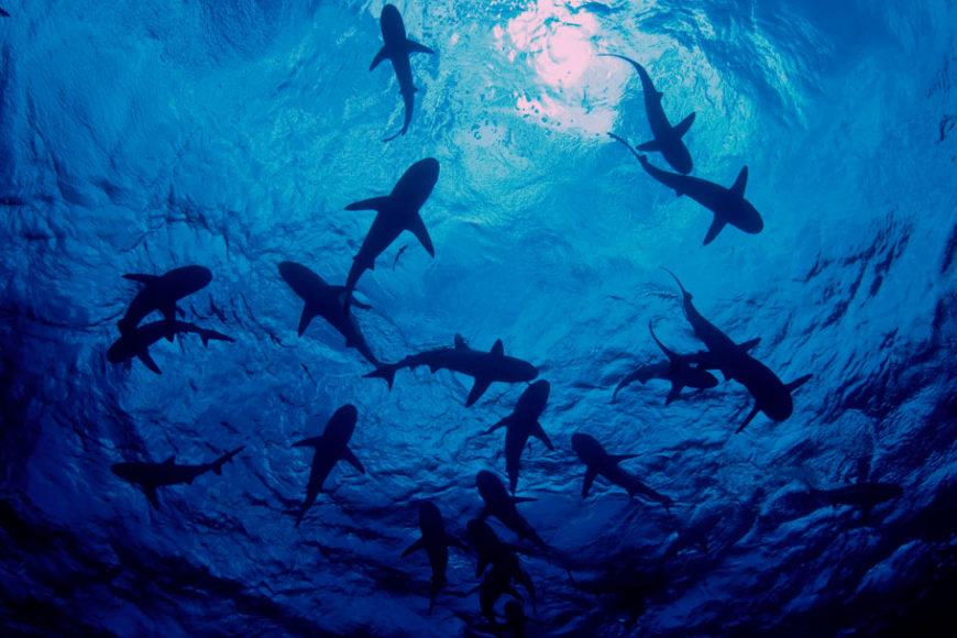 logay-negocios-lgbti-shark-tank-inovasocial-destaque