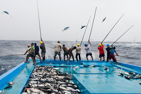 ods-14-pole-line-fishing-maldivas-inovasocial-01