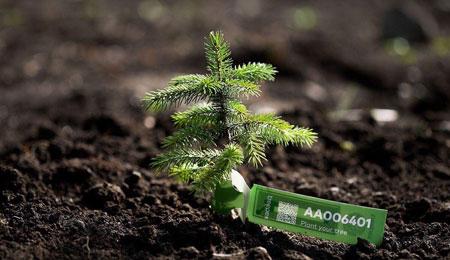 treespond-arvore-trump-mudanca-climatica-01