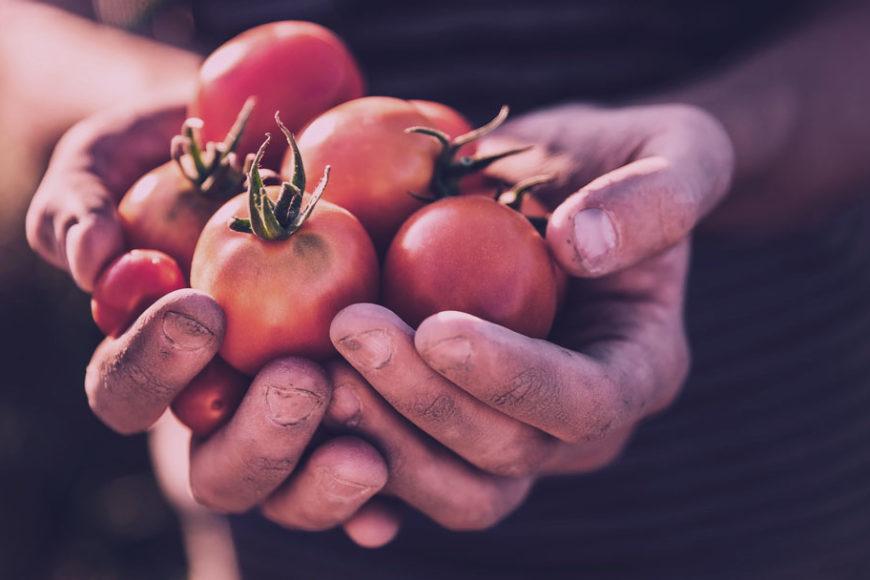 2020: Alimentos orgânicos, crise financeira e outras previsões