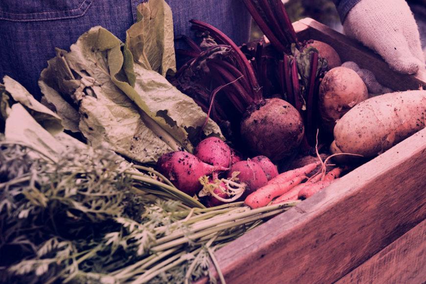 experimenta-comida-saude-cultura-2018-inovasocial-destaque
