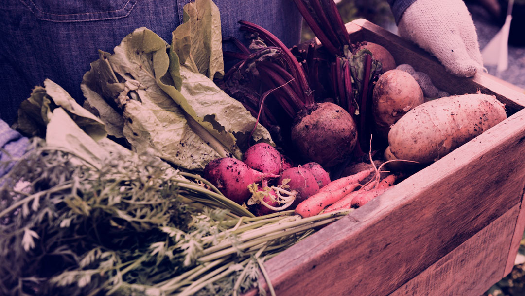 """Festival """"Experimenta! Comida, Saúde e Cultura"""" conta com mais de 300 atividades focadas no universo alimentar"""