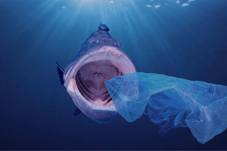 Lixo nos mares: Ministério do Meio Ambiente lança consulta pública