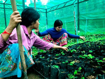camboja-reflorestament-chuva-inovacao-social-inovasocial-02