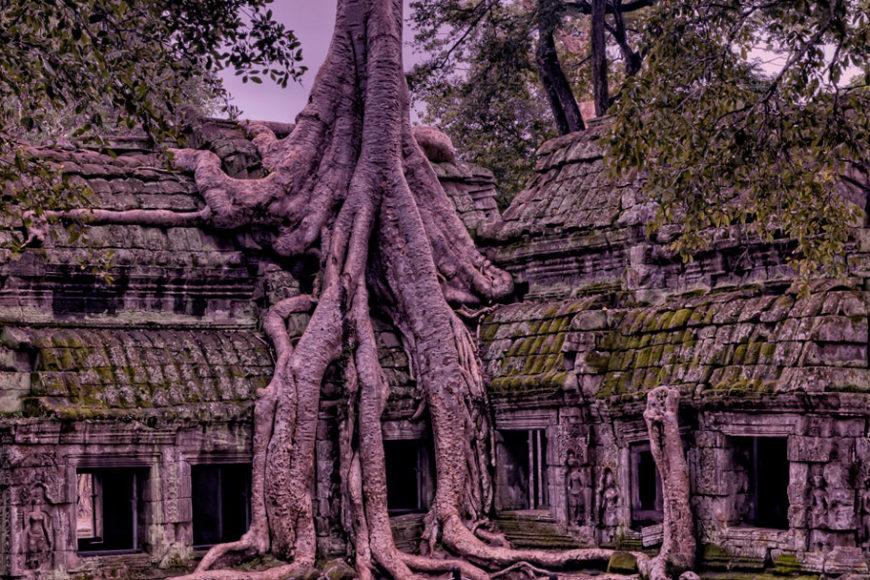 camboja-reflorestamento-chuva-inovacao-social-inovasocial-destaque