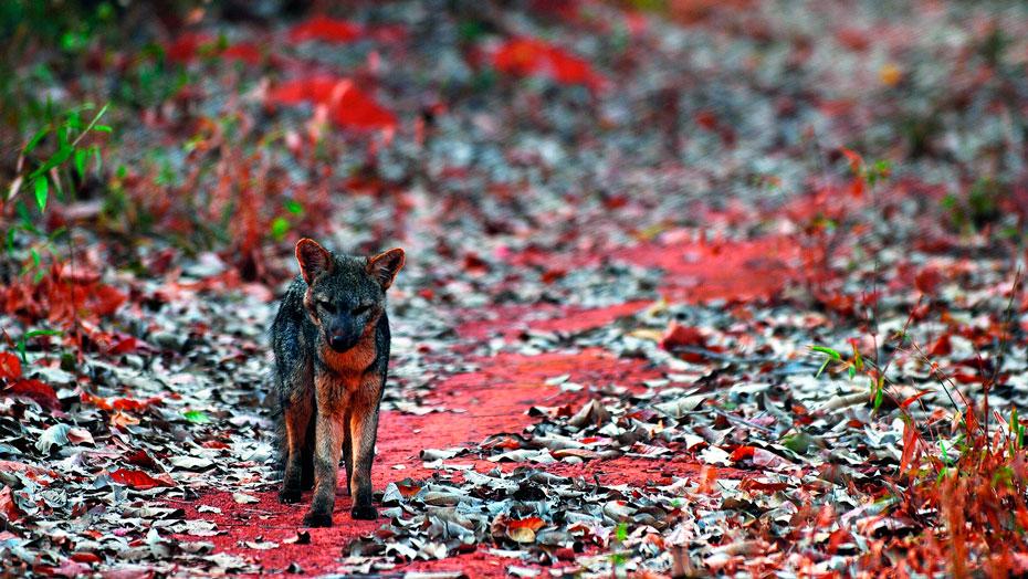 fumdham-parque-nacional-serra-da-capivara-inovacao-social-inovasocial-12