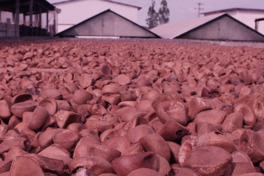 Projeto Reca: Fomentando a agricultura familiar