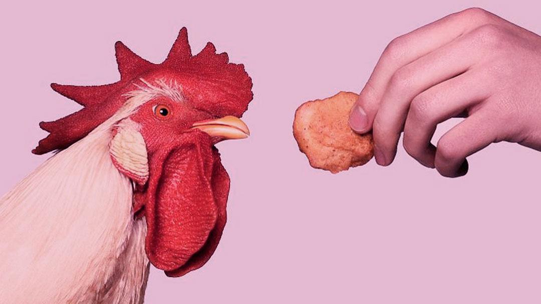NUGGS: Essa nova marca de carne plant based foi criada por um jovem de 19 anos!