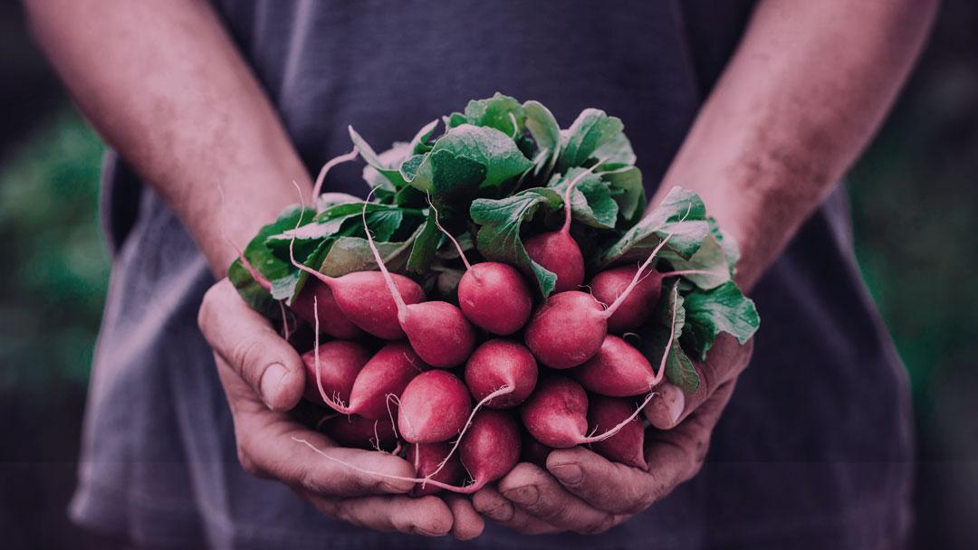 Podcast #41: Alimentos orgânicos, transição de carreira e a luta contra os agrotóxicos