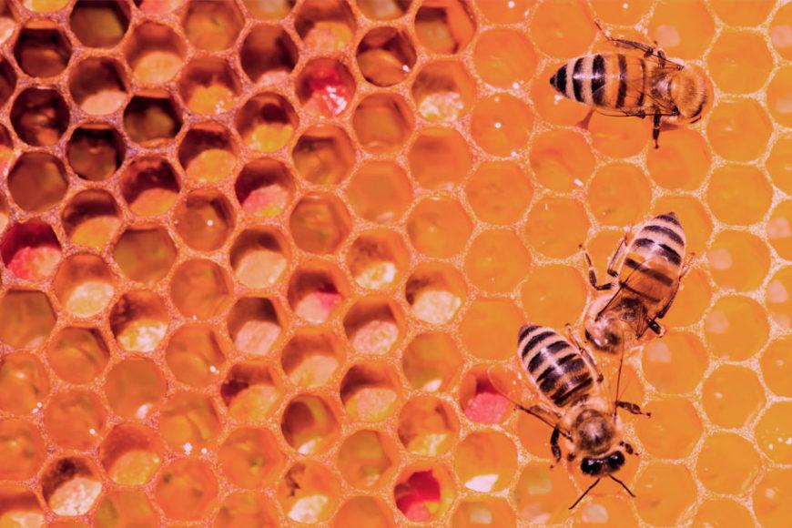 por-que-precisamos-das-abelhas-ted-talks-inovacao-social-inovasocial-destaque