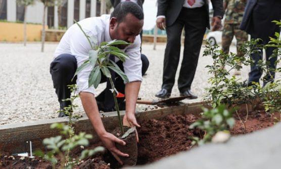 etiopia-planta-350-milhoes-de-arvores-em-um-dia-inovacao-social-inovasocial-01