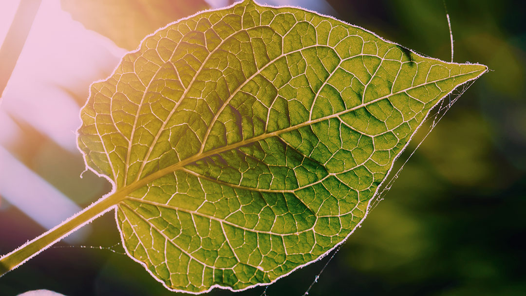 É possível hackear a fotossíntese? Talvez sim.
