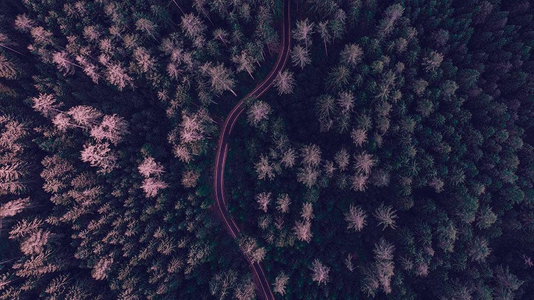 Forest: O app que te ajuda a ficar longe do celular enquanto te inspira a plantar árvores