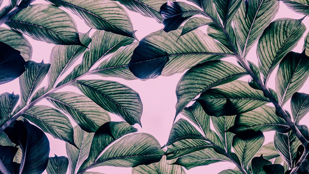 Cientistas criam folha artificial capaz de transformar CO2 em energia