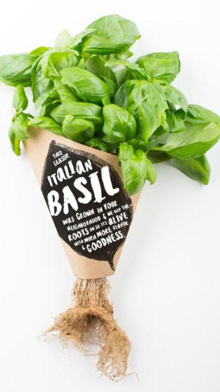 infarm-cultivo-verduras-supermercado-inovacao-social-inovasocial-03