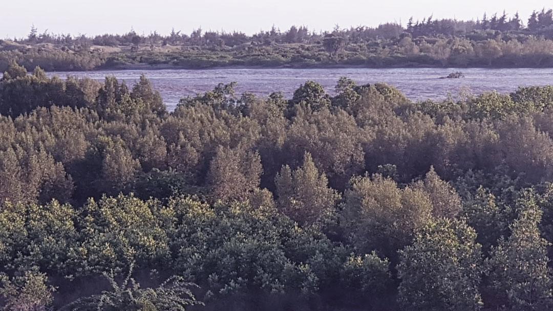 Águas no Quênia: Pântano artificial contra a poluição do rio Mtwapa Creek