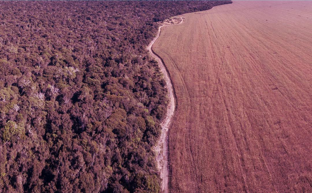 10 princípios para a exploração sustentável da Amazônia