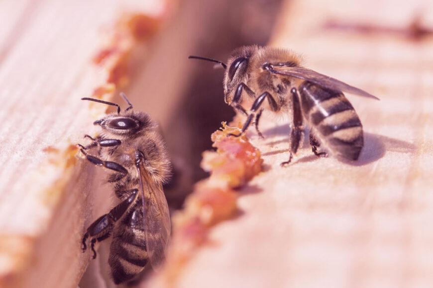 """De carvão a abelhas: Quem são os 6 vencedores do """"Nobel Verde"""" e suas causas"""