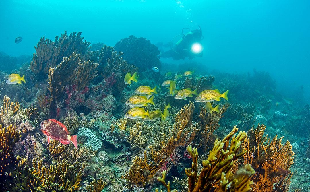 Brasil usa tecnologia pioneira para reprodução de corais