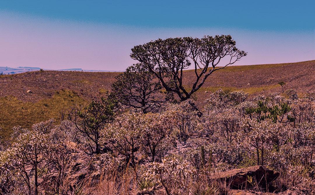 Acelera Cerrado quer fortalecer OSC para conservação do Cerrado brasileiro