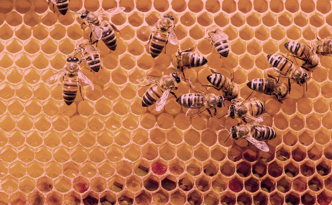Beewise: Startup quer ajudar a salvar a população global de abelhas
