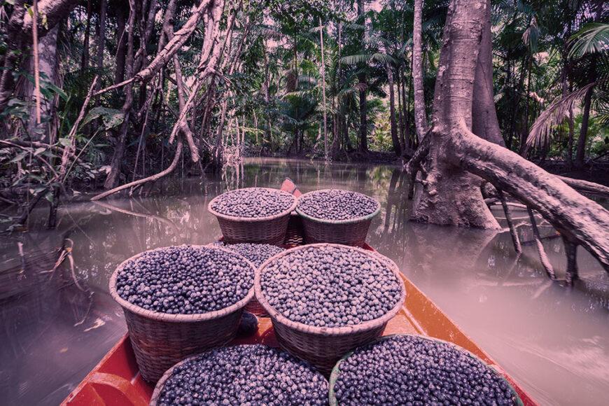 Demanda pela preservação ambiental alerta para valorização da floresta em pé