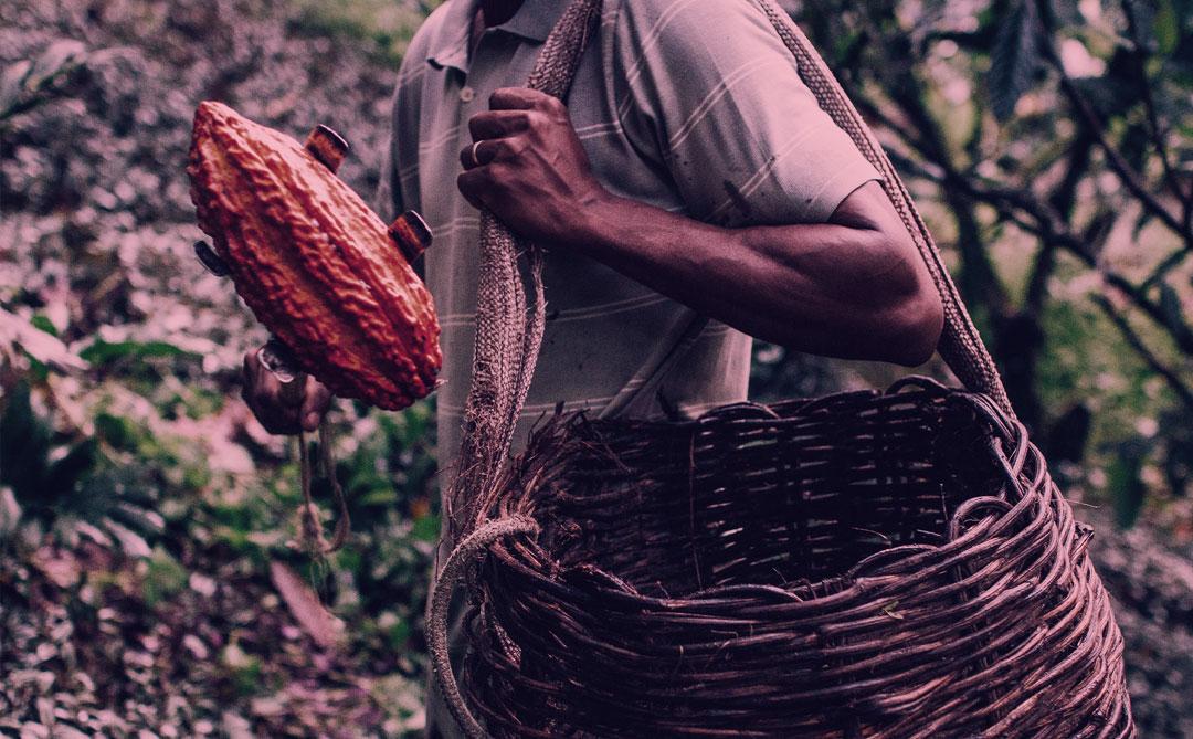 Podcast #73: O comércio justo da Dengo na produção de chocolate no Brasil