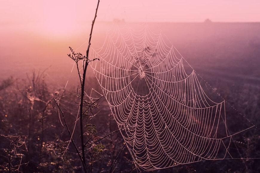 Conheça o bioplástico inspirado na seda das aranhas