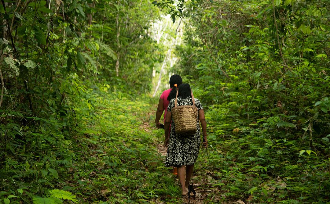 ZCO2: Nova criptomoeda busca proposta inédita de proteger a floresta amazônica