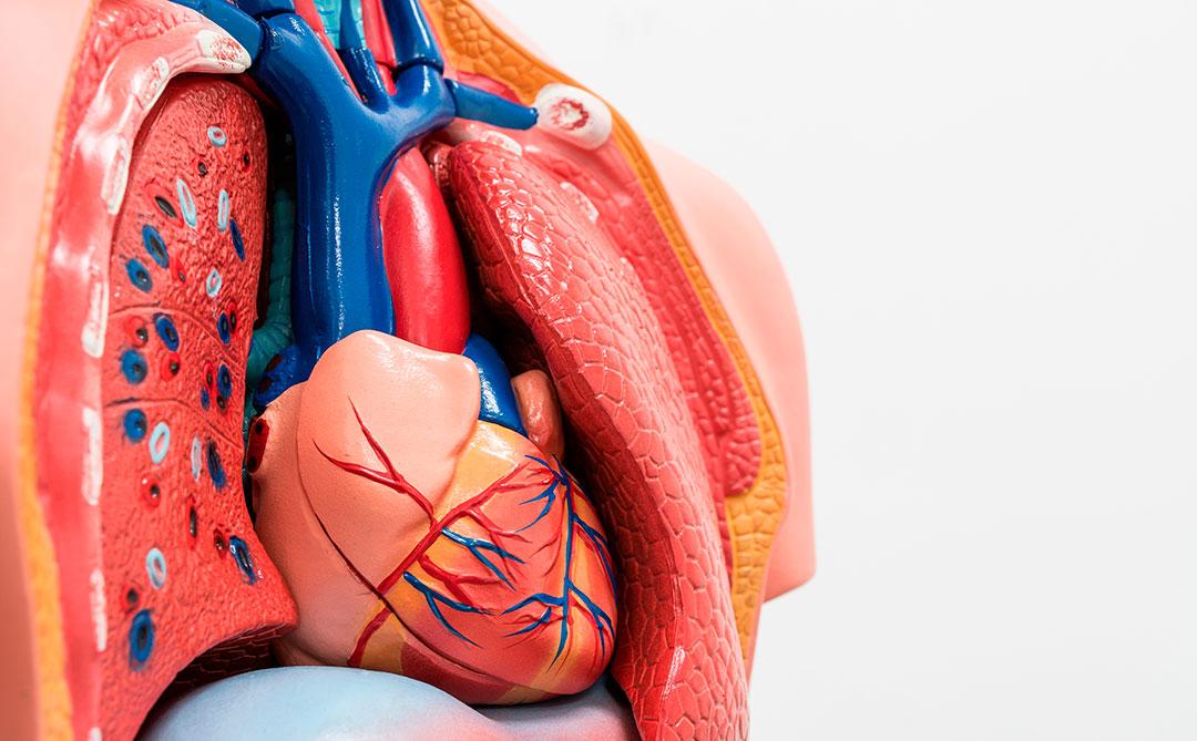 Body Stuff: Você realmente sabe como seu corpo funciona?